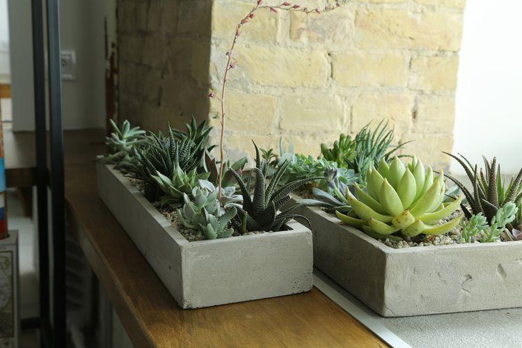 Betonové květináče na kaktusy