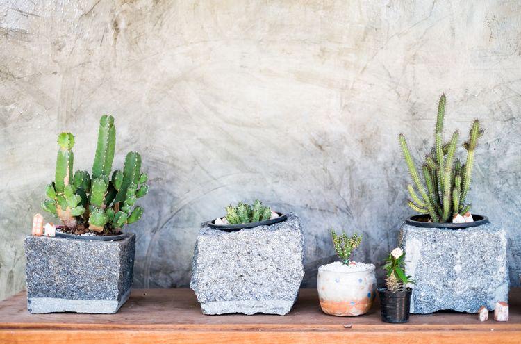 Kaktusy v betonových květináčích