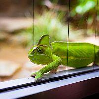 Jak zařídit terárium pro chameleona? Zařízení pro začátečníky