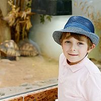 Jak zařídit terárium pro suchozemskou želvu?