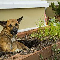 Jak odnaučit hrabat psa a značkovat na zahradě