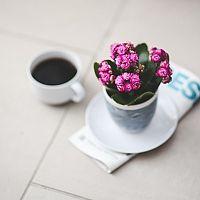 Kalanchoe – pěstování i po odkvetení. Jak zalévat, stříhat a hnojit