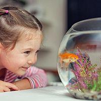 První vlastní akvárium – jak vybrat? Jaké doplňky a co koupit