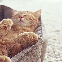 Odpočívadla, škrabadla a další pomůcky pro domácí kočky