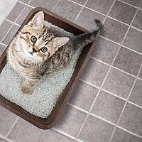 Kočičí toalety mohou být kryté a s filtrem. Nejlepší je silikátová podestýlka
