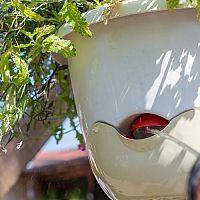 Samozavlažovací květináče i na balkon na bylinky. Závěsné jsou IN