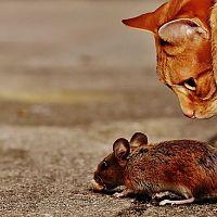 Plašiče myší a odpuzovače hlodavců – fungují?