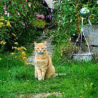 Jak vyhnat kočku ze zahrady