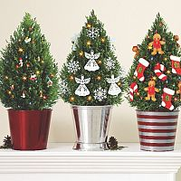 Jak se starat o živý vánoční stromek v květináči?
