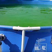 Jak se zbavit zelené vody a řas v bazénu?