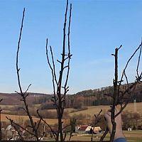 Zimní řez ovocných stromků