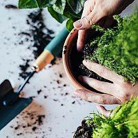 Rostliny v domácnosti – jaký mají význam? Jaké jsou jejich výhody?