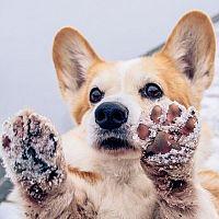 Jak se v zimě starat o psí tlapky?