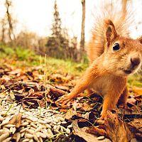 Jak se zbavit veverky na zahradě nebo na půdě?
