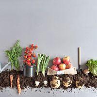 Jak využít domácí kompost?