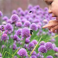 Jak vytvořit zahradu, která bude přátelská i pro včely?
