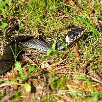 Jak se zbavit hadů na zahradě? Co odpuzuje hady? Postřik proti hadům funguje