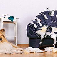 Odnaučit psa kousat nábytek a kočku škrábat sedačku je těžké