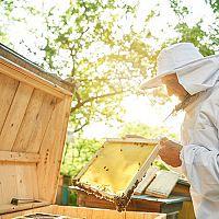 Chov včel a legislativa: Jaké jsou povinnosti včelaře?