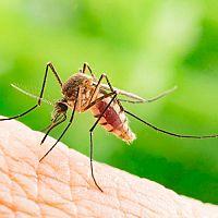 Komáři – jak se jich zbavit? Pomůžou kupované repelenty, ale i přírodní odpuzovače komárů