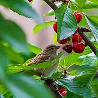 Jak vyhnat vrabce ze zahrady a ze střechy? Vyzkoušejte pasti, plašič nebo tmel na odpuzování
