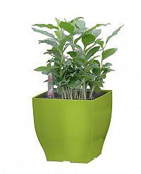 G21 Cube 57651 Květináč mini 13.5cm, zelený