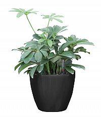 Samozavlažovací květináč G21 Ring černý 17.5cm