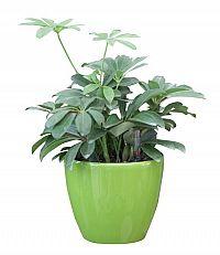 Samozavlažovací květináč G21 Ring zelený 17,5cm 6392553