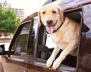 Bezpečné cestování se psem v autě: Jaké pomůcky přijdou vhod?
