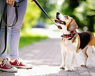 Vodítko pro psa: Jaké na běhání či bicykl? Lankové nebo samonavíjecí?