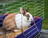 Jak zařídit klec pro chov zajíce v bytě?