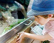Zařízení terária pro hada je levné – chov hada pro začátečníky