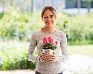 Brambořík – pěstování v bytě i venku na zahradě