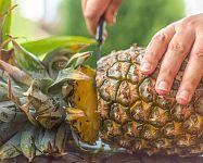 Jak vypěstovat ananas z odřezku