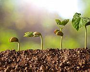 Sázení mrkve, hrachu, fazole, cibule či kedlubnů – kdy a jak