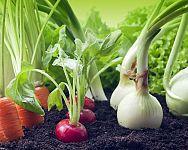 Co s čím sázet a pěstovat na zahradě? Co po bramborách, česneku, cibuli