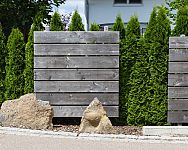 Živý plot z tújí, habru, smrku nebo muchovníku. Které jsou vhodné rostliny?