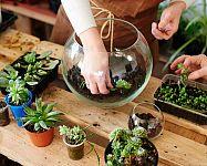 Jak si vyrobit eko rostlinné terárium? S vhodnými rostlinami to zvládnete jednoduše!