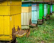 Kam umístit úl? Umísťování úlů má svoje pravidla