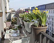 Jak se zbavit hmyzu na balkóně? Pomůže svíčka proti hmyzu i květy proti komárům a mouchám