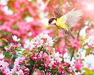 Přínosní ptáci na zahradě: sýkorky, vrabci, drozdi, špačci, žluny, vrány, sojky. Jak je přilákat?
