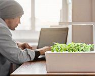 Inteligentní květináče na bylinky: Smart Garden, Lua, Click and Grow