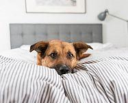 Nechat či nenechat spát psa ve svojí posteli? Prozradíme vám plusy i mínusy