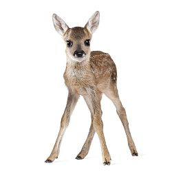 Nástěnná samolepka Dekornik Deer Lucy, 55x88cm