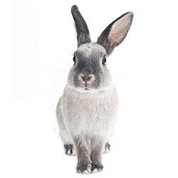 Nástěnná samolepka Dekornik Rabbit Harry