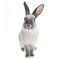 Nástěnná samolepka Dekornik Rabbit Harry, 37x80cm