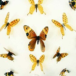 Sada 18 adhezivních 3D samolepek Ambiance Butterflies Yellow