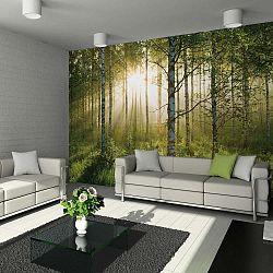 Velkoformátová tapeta Forest, 315x232cm