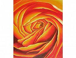 Obraz - Květ růže