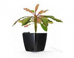 Samozavlažovací květináč G21 Cube černý 22cm
